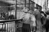 slon Pepík s O.Vítkovou v kunčické zoo